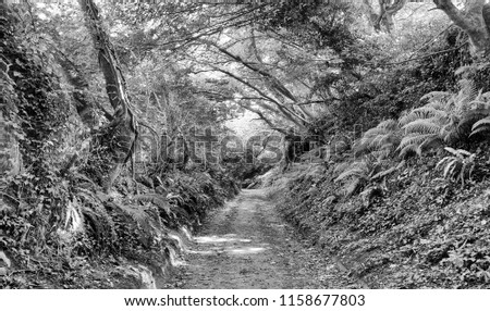 Shutes Lane, an ancient hollow-way or track at Symondsbury in Dorset, England. Footfall over thousands of years has worn the soft sandstone into a gorge. A high contrast monochrome edit.