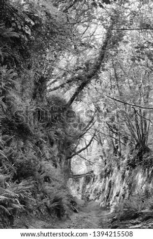 Shutes Lane, Symondsbury, Dorset, England, an ancient sunken holloway photographed in monochrome.