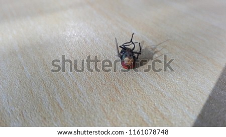 Shutterstock House fly, Fly, House fly on the table.