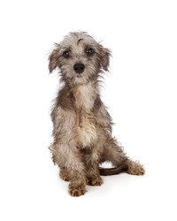 Shy and scared young rescue dog with dirty and shaggy fur in need of a bath and groom