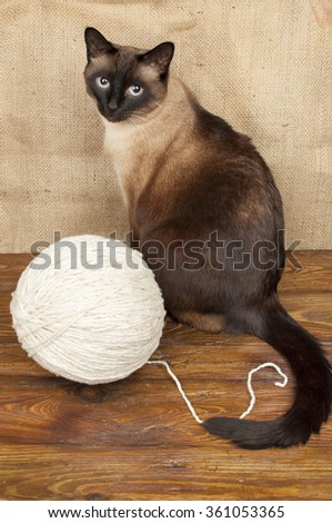 siamese cat and ball of wool
