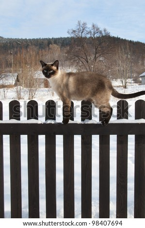 siamese cat on the fence