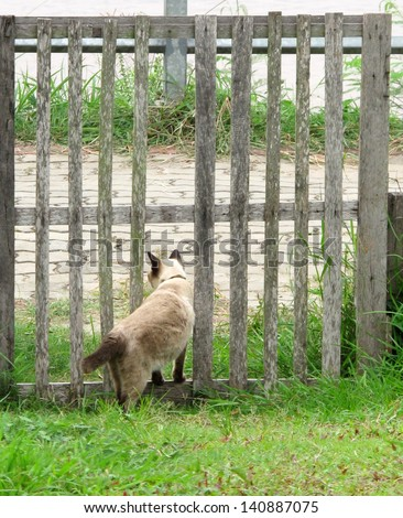 Siamese cat pass through the fence