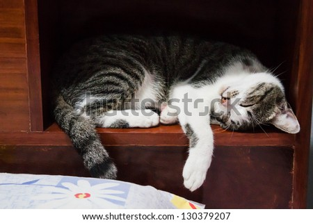 Siamese cat sleeping on a box of wood bed
