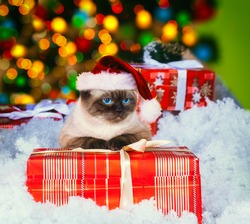 Siamese cat wearing Santa hat with present against Christmas light