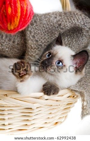 Siamese cat with ball of threads in bast basket