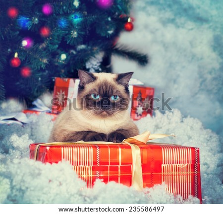 Siamese cat  with present against Christmas tree