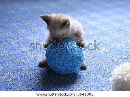 siamese kitten playing with ball