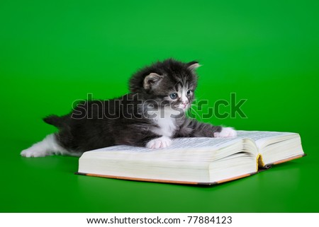 Siberian black tiger kitten with book on light green background