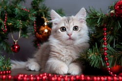 Siberian cats and kittens on beautiful  background perfect for postcards