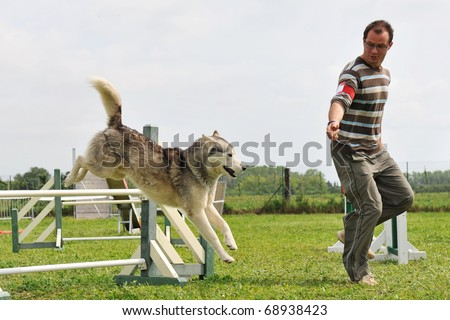 siberian husky and man in a competition of agility