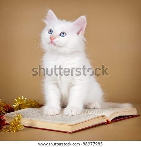 Siberian kitten on the book