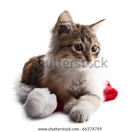 Siberian kitten sitting on Santa Claus hat