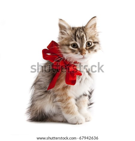 Siberian kitten with red ribbon