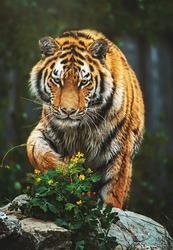 Siberian tiger (Panthera tigris altaica) detail portrait