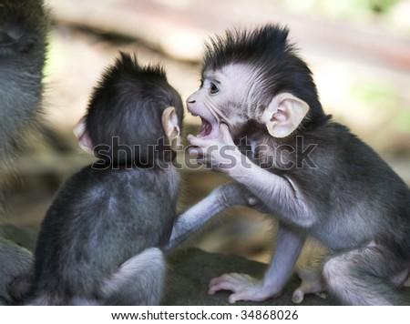 sibling monkies whispers