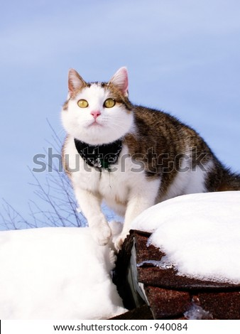 Sick Cat with Bandage Climbing On - winter scene with cat, snow and sky - stock photo