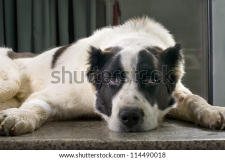 sick dog in a veterinary clinic