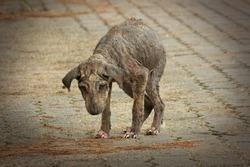 Sick dog, street dog