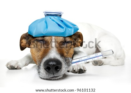 sick dog with a ice bag