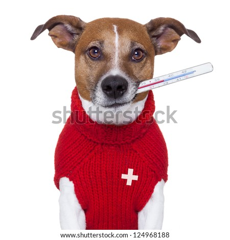 sick ill cold dog  with fever