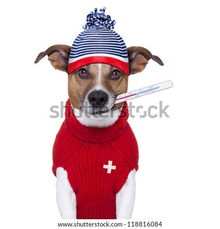 sick ill cold dog  with fever and hat