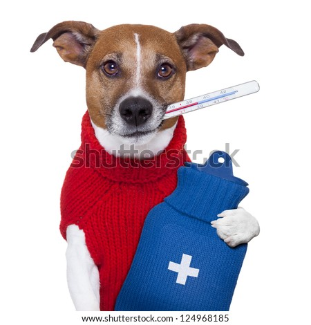 sick ill cold dog  with fever and hot water bottle