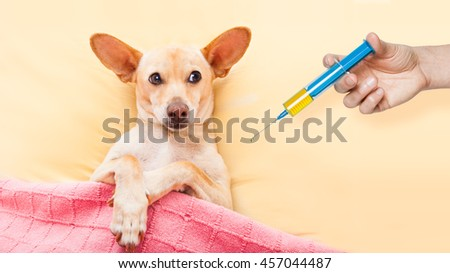 sick ill dog resting and recovering in bed , headache or fever, thermometer in hand