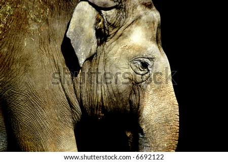 side portrait of an elephant