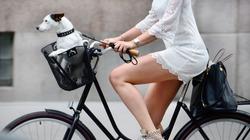 Side shot of woman and dog on bike