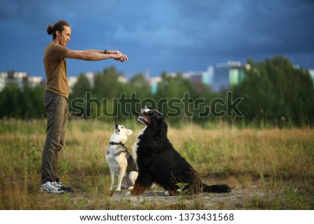 Side view at a young stylish caucasian man training two dogs Bernese Mountain Dog and shepherd dog on the summer field #1373431568