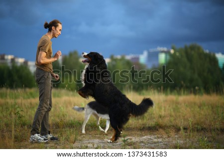 Side view at a young stylish caucasian man training two dogs Bernese Mountain Dog and shepherd dog on the summer field #1373431583