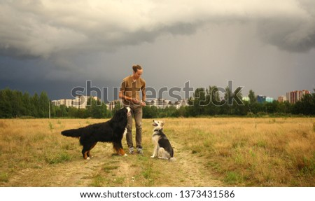 Side view at a young stylish caucasian man training two dogs Bernese Mountain Dog and shepherd dog on the summer field #1373431586