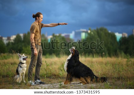 Side view at a young stylish caucasian man training two dogs Bernese Mountain Dog and shepherd dog on the summer field #1373431595