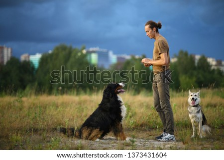 Side view at a young stylish caucasian man training two dogs Bernese Mountain Dog and shepherd dog on the summer field #1373431604