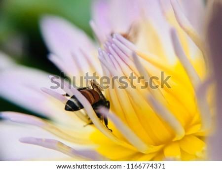 Free Photos Inside A Lotus Flower Avopixcom