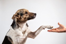 Side view Dog paw and human hand doing a handshake on gray background