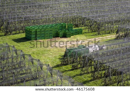 Side view from above on the large apple orchard with some crates and boxes in the middle.