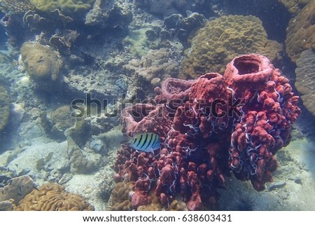 Side view of a Barrel sponge live and grow at the coral reef under the tropical sea. The white things are worms live on sponge. And a colorful fish in the middle of picture. Underwater picture