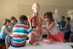Side view of a Caucasian elementary school boy and girl working with a human anatomy model during a biology lesson, with their classmates working in the background, two boys studying a model of a