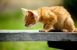 Side view of a curious orange kitten on a bench staring intently at something