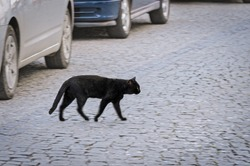 Side view of a homeless black cat crossing the street amond the cars. Defocused photo with blur in motion.