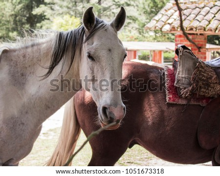 Side view of a horse on a farm while feeding #1051673318