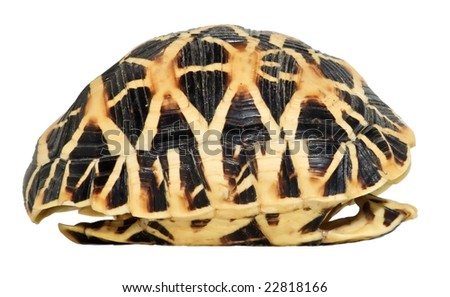Side view of a tortoise shell isolated on white - stock photo