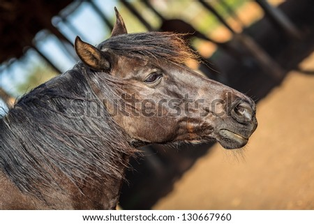 Side-view of brown male horse