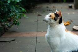 Side View of Callico cat in park