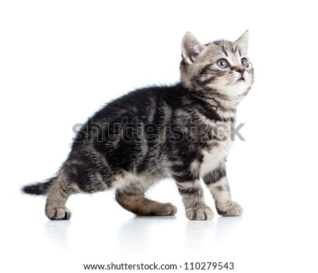 side view of funny little kitten isolated on white background