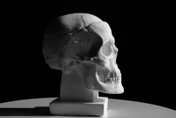 Side view of gypsum model of the human skull on black background with clipping path. Concept of terror, physiology learning