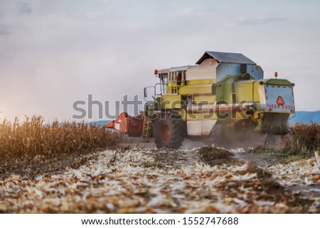 Side view of harvester in corn field harvesting in autumn. Husbandry concept.