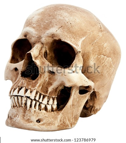 free stock photos of skull · pexels, Skeleton